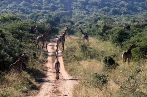 AS-Tala Game Reserve